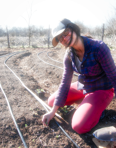BFF volunteers work on a variety of tasks, which may include contour measuring and definition, bed planning, irrigation setup, and transplanting seedlings like Cristina is here.